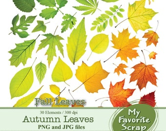 Digital Clipart Autumn Leaves Fall Leaves (30 separate digital graphics) Set for Personal and Commercial Use Paper Crafts Digital Graphics