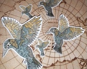 Kingfisher Sticker - 5 pack