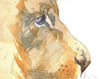 Beautiful lion art print, 210 x 297 mm