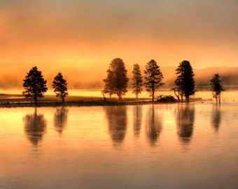 Golden Days--Yellowstone National Park, river, sunrise, trees, wyoming, fine art, photography, landscape
