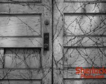Rustic Vine-Covered Doors - Image 03301