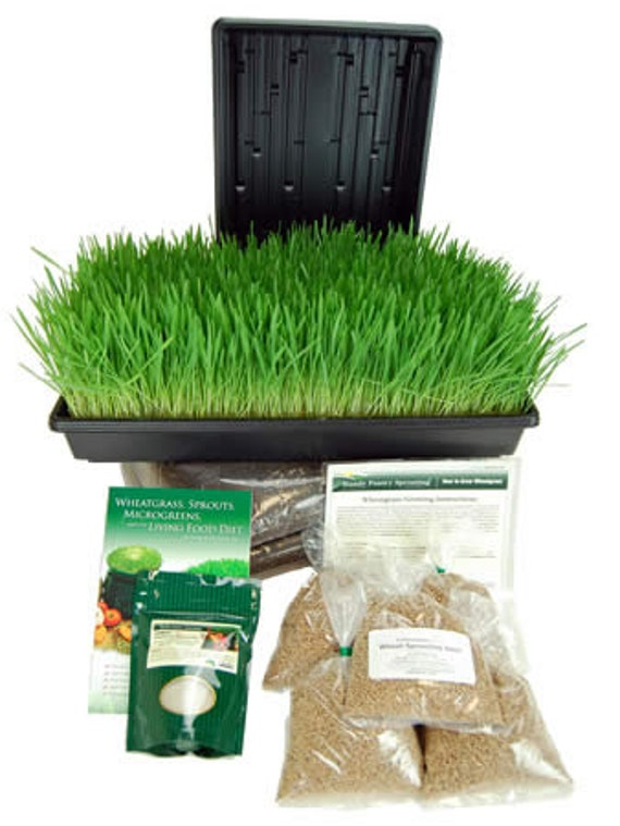 Perfect Foods, Inc has been growing and distributing fresh organic wheatgrass in New York since We are proud to be the world's premier growers, and hope to become the #1 destination for learning about the benefits of drinking wheat grass juice and to buy wheatgrass juicers and wheatgrass kits.