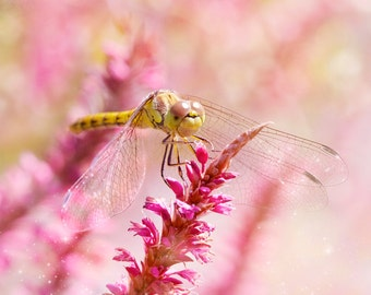 Nature Photography, Dragonfly, Flowers, Pink, Sparkly, Fine Art print, Home Decor.
