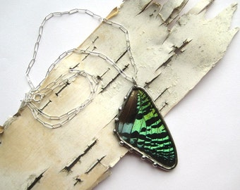 Real Butterfly Necklace- Green Sunset Moth Wing Jewelry, full wing encased in glass, sterling chain