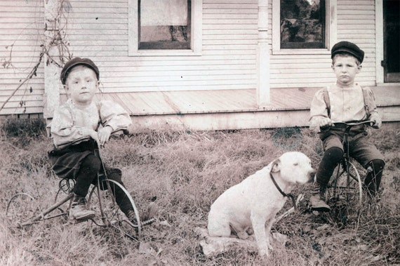 vintage photo Boys on Metal Tricycles w White Pit Bull Dog bicycle