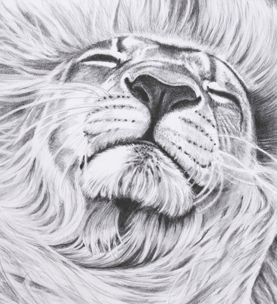 Artwork 8 x 10 Print of Original Lion Pencil Drawing by ...