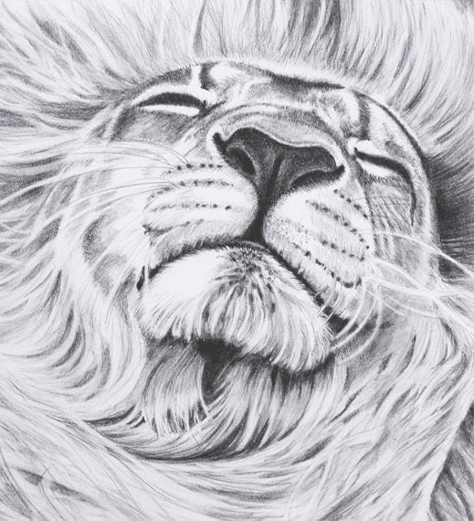Lion Pencil Drawing Artwork 8 X 10 Inch Giclee Print Of