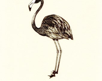 American Flamingo (Limited Edition Print)