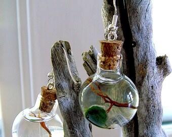 Mini Terrarium Pair of Earrings Live Marimo Moss Ball Ecosphere Orbs