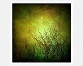 Nature Photography,  moss green, moon, bare trees, Equinox fine art photography print 10x10
