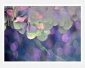 Lavender Decor, Photography, hydrangeas, pastels, Dreams of My Garden, nature fine art photography print 8x12 - moonlightphotography