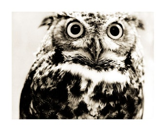 Vintage Style Great Horned Owl Fine Art Photography Bird Sepia 8 x 10 Wildlife Nature Print