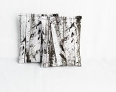 Modern Sachets Filled with Dried Flowers, Botanical Scented Sachets for Drawers, White Birch Tree Decor, Gift for Women