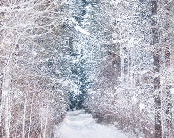 Winter Photography, Forest in Snow, Birch and Evergreen Trees, Nature Photography, Wall Decor