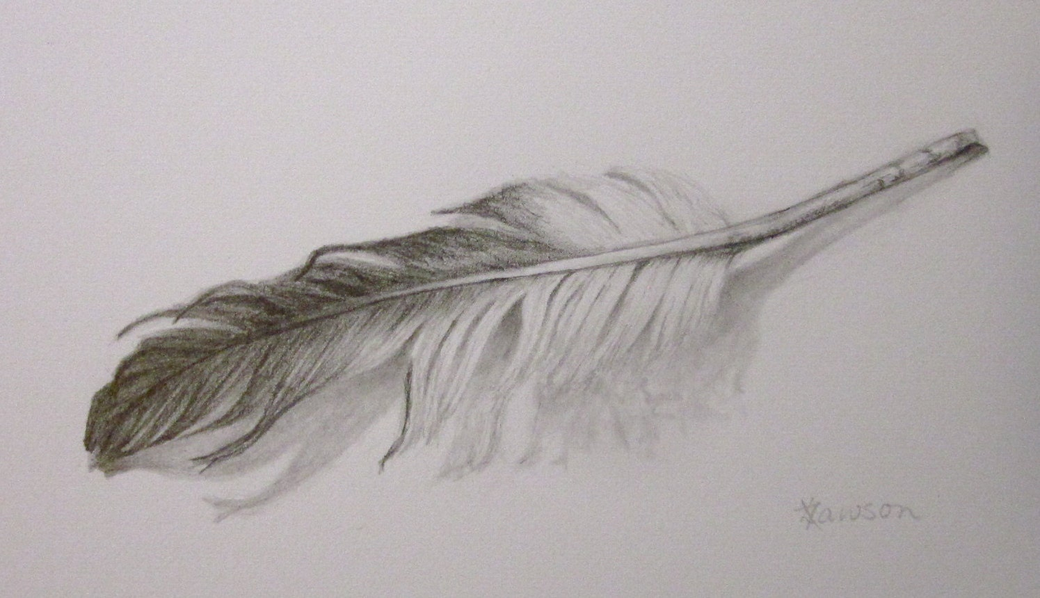 Feather original pencil drawing