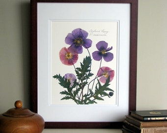 Pressed flower print, 11x14 double matted, Iceland Poppy flowers, purple poppies art, wall decor no. 0049