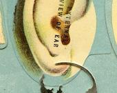 Skull Earrings, Sterling Silver