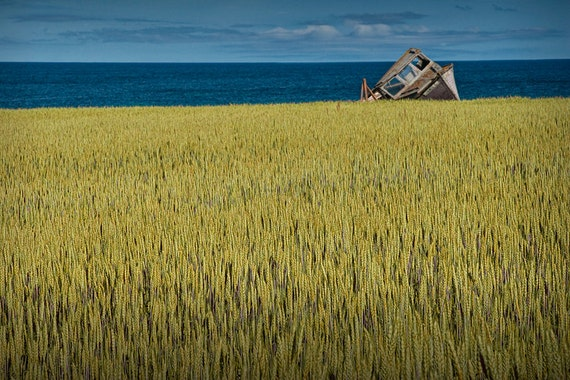 Abandoned Boat Wreck on the Edge of a Field overlooking the Ocean on Prince Edward Island A Fine Art Seascape Boat Photograph
