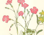 1959 Alpine Plantain, Herb Linn, Wood Pink, Hare's Ear Vintage Lithograph to Frame