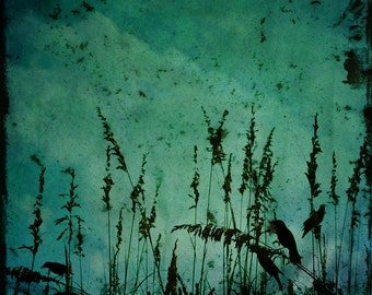 Crow Art Photograph Grunge Raven Haunting Black Bird Landscape Deep Teal Wall Art 8x8 photograph