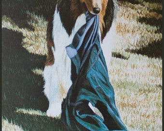 Time Out, Collie lithograph print by Cindy Alvarado