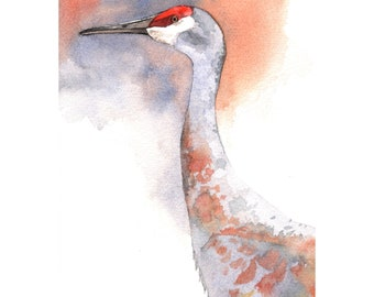 Sandhill Crane Painting - Bird Art - print of watercolor painting- 5 by 7 print wall art print - bird art print