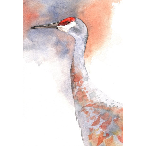 Sandhill Crane Painting - Bird Art - print of watercolor painting- 5 by 7 print wall art print - bird art print