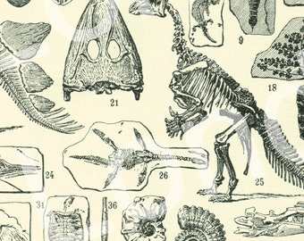 1922 Vintage Paleontology print illustration dinosaur skeleton fossils science French dictionary page  1922
