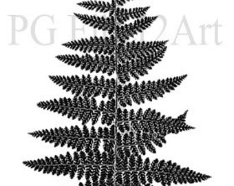 Thermofax Screen Fern