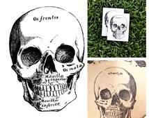 Skull - temporary tattoo (Set of 2)