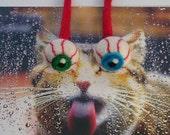 Blue eyeball catnip cat toy