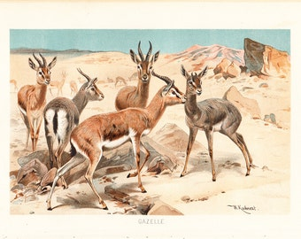 1890 Antique GAZELLE print,  fine chromolithograph,  group of delicate gazelles in the savannah, original antique 122 years old print