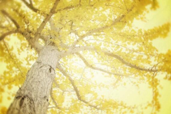 Yellow Wall Art items similar to tree photography, yellow wall art, yellow tree