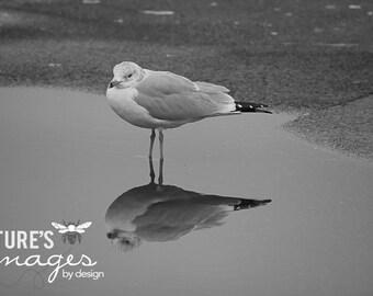 Single Seagull Print - Sea Bird Photo - gift under 30 photography wall art home decor theartisangroup