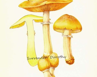 Gypsy Mushrooms Pholiota Caperata Edible Mycology Chart Food Botanical Lithograph Illustration For Your Vintage Kitchen 36