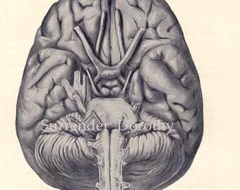 Human Anatomy Brain BIG Vintage Medical Chart Illustration To Frame 1930s Original