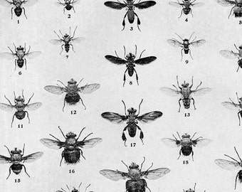 True Fly Chart Edwardian Entomology 1907 Natural History Rotogravure Illustration Of Insects To Frame XXII