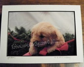 362 5x7 Matted  Golden Retriever Christmas Signed Photography Photograph Print Winter Christmas Holiday
