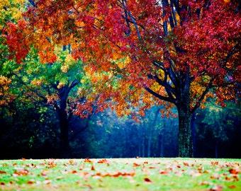 colorful landscape photography - autumn tree - fog and mist - fall foliage - nature photo - decorative print