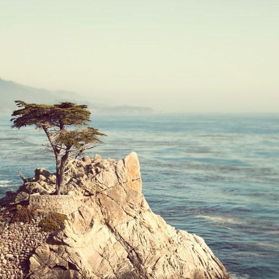 Lone Monterey Cypress Tree, Beach Art, Ocean Print, Coastal California Landscape, Nature Photography, 8x8 California Print - 17 Miles
