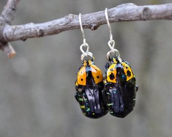 Floating Real Flower Beetle Earrings Yellow and Black