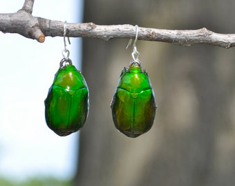 Floating Real Scarab Beetle Earrings Green similar to Moonrise Kingdom