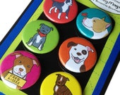 Pit Bull Silly Dog Magnet Set