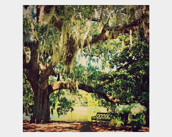 Under the Live Oak Tree: square fine art photograph print of deep south landscape with bench, spanish moss, green