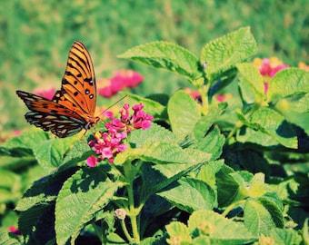 Pink Orange Green Photo, Butterfly Print, Butterfly Photo, Bright Wall Art, Pink Flower Photo, Spring Plant Photo, Lantana Photo, Botanical