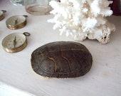 Turtle Tortoise Shell