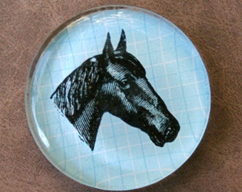 Horse Magnet - Jumbo Glass Magnet of Horse Head - Kentucky Derby Horse Magnet