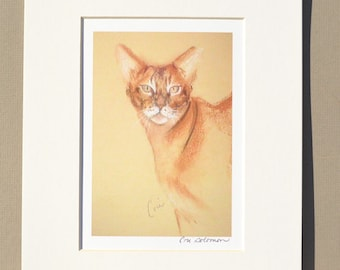 Abyssinian Cat Art Signed Matted Print By Cori Solomon