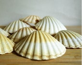 Vintage Scallop Shell Baking Dishes Set Seashell Appetizer Serving Set