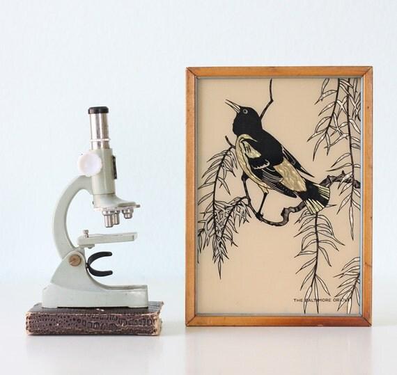 Vintage Bird Print - Black Baltimore Oriole